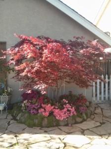 Mom Garden 4