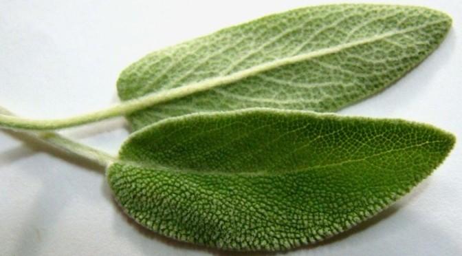 Proof God's a woman: Emmenagogue herbs